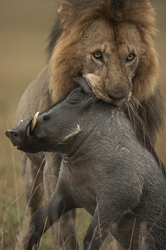 Kenya Photographic Safari To Masai Mara Lake Nakuru And