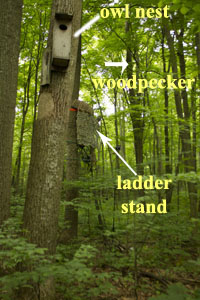 Pileated Woodpecker Photography