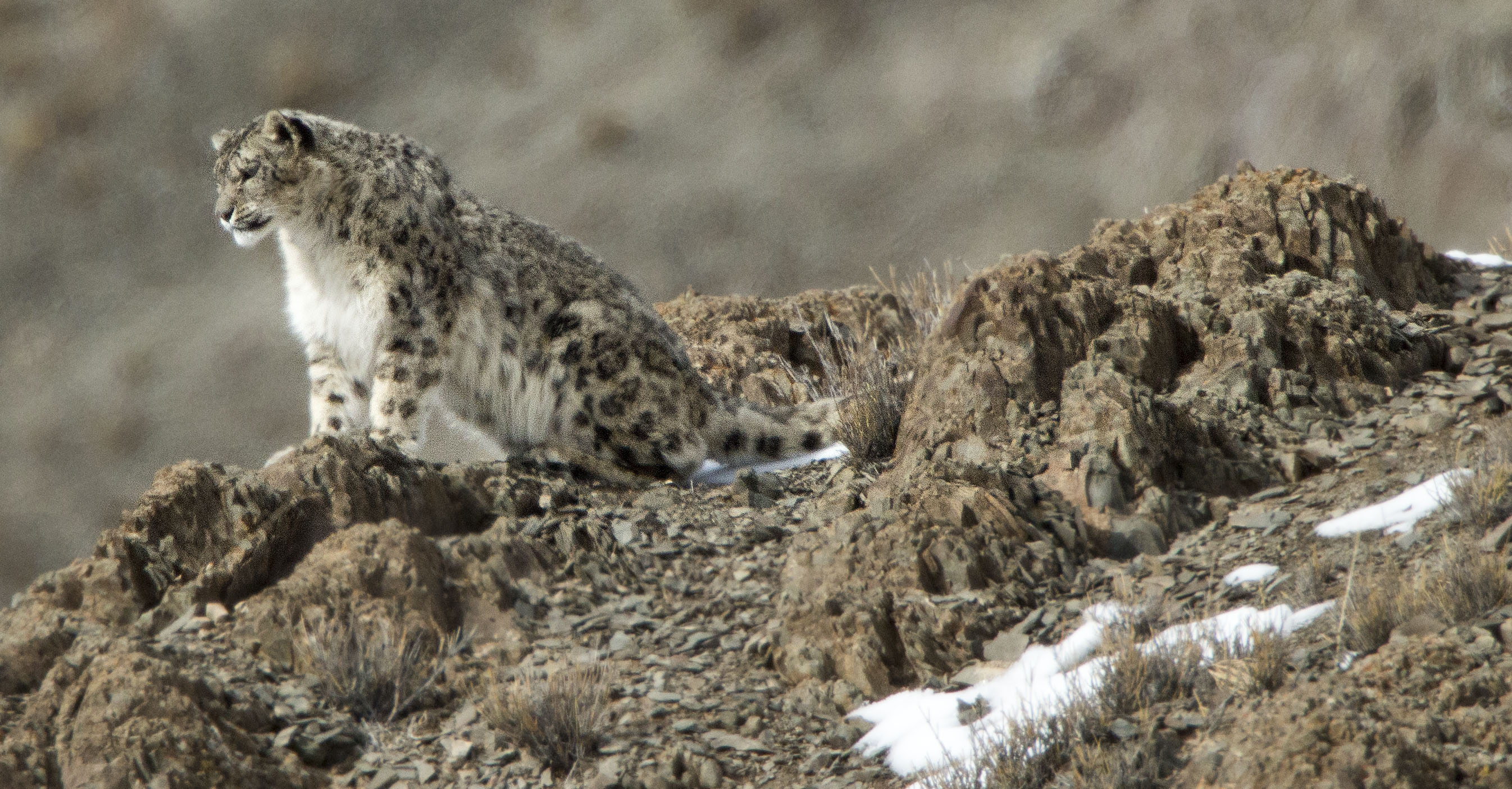 98 Snow Leopard Secrets