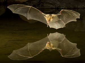Bat Photography And Photo Tours And Workshops