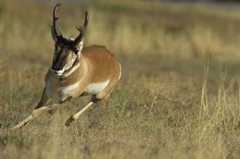 Yellowstone Wildlife P...